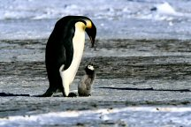 Penguin&Chick13AA.jpg