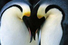 PenguinKissAA8.jpg