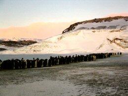 PenguinMarchAA28.jpg